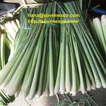 lemon grass in vietnam