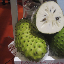 FRESH AND DRIED SOURSOP GRAVIOLA FRUIT / SOURSOP PUREE SGS CERTIFIED QUALITY ISO, GMP HACCP