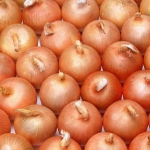 Quality Fresh Red Onion for sale