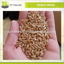 Raw Whole Wheat Grain at Affordable Market Price for Sale
