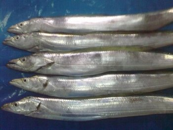 250-300-350g frozen fish ribbon fish for market