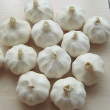 fresh pure and white whole garlic