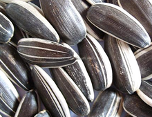 High Quality Sunflower Seeds Kernels