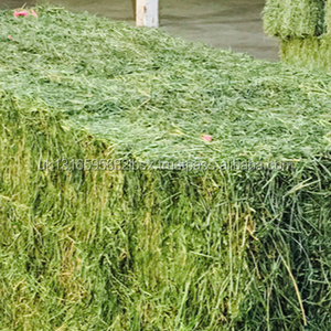 Cheap Alfalfa Hay For Sale