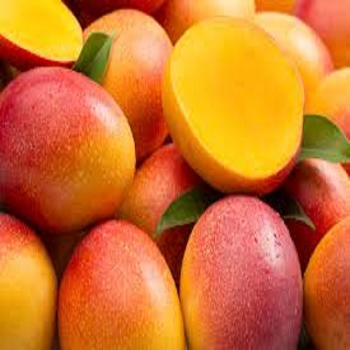 FRESH MANGO FOR EXPORTING FOR SALE
