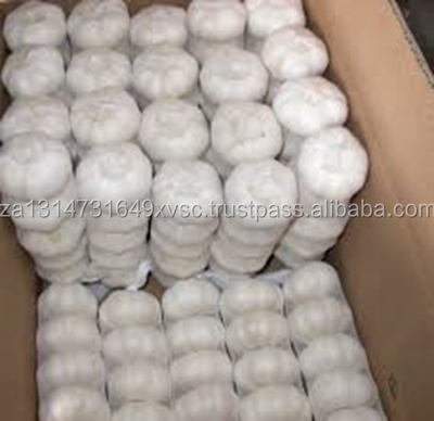 Sell High-quality Fresh Natural pure white garlic