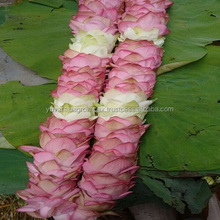 Medium & Large Size Of Fresh Flower Lotus GarLand
