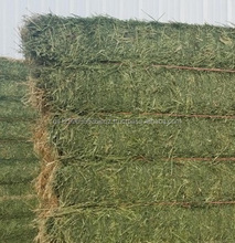 Highly Cheap high quality Animal feed Alfalfa Meal / Alfalfa Hay for sale/Timothy Hay for sale/