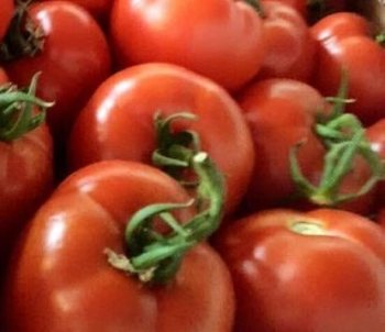 Best Quality Fresh Tomato from Denmark