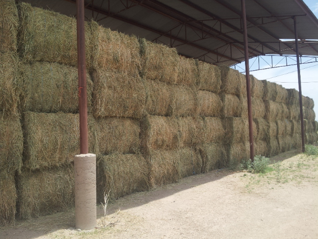 Alfafa Hay in Bales, Premium Alfafa Hay, Timothy Hay For Sale