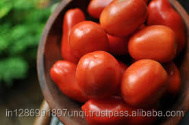 Fresh Tomato 3 CM for Export
