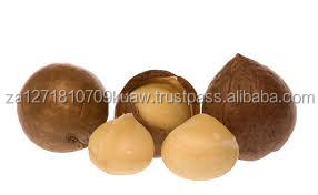 Raw and Roasted Macadamia Nuts In Shell and Kernel/ Raw Organic Macadamia Nuts