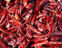 hot sale high quality chilli pepper