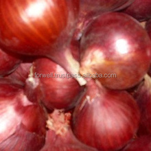 Egypt supplier fresh red onion importers