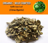 WHOLESALE Kaffir Lime Leaf Citrus Hystrix Organic Wild Crafted Fresh Natural Herbs