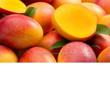 hot Selling Fresh Pakistani Chaunsa Mango
