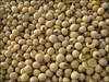 Natural organic raw soybeans