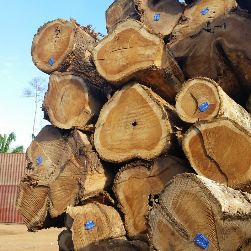 teak , padouk sawn wood and logs for sale