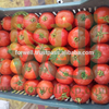 5 Stars Egyptian Suppliers for fresh tomato