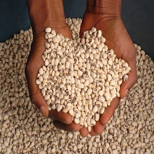 Grade A white black eyed cowpea/bean