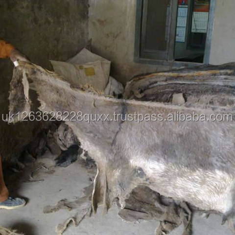 WET SALTED DONKEY/ HORSE/COW HIDES AND SKIN