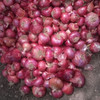 Fresh Indian Onions