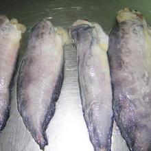 Quality Frozen Cod Fillet Fish