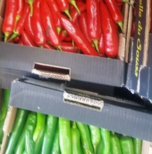 fresh egyptian red & green chili high quality (A)
