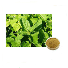 Honson Ingredient: Natural 10:1 Nettle Glycosides Nettle Root Extract