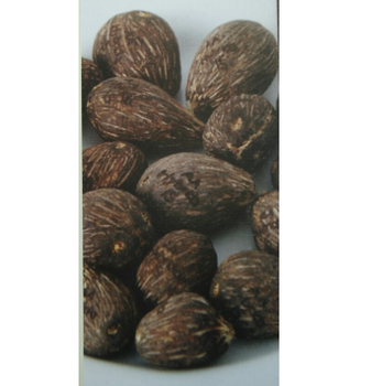 Hybrida AA Palm Oil Seed