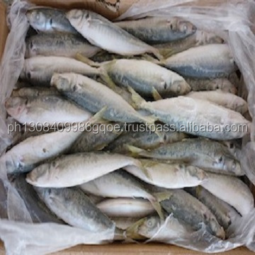 frozen mackerel fish, Pacific Mackerel Frozen Mackerel Fish
