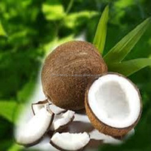 100 % organic Cultivation type / Matured coconut/ whole sale coconut