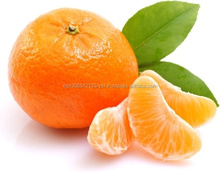 MANDARIN FROM EGYPT WITH LOW PRICES