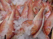 WHOLE FROZEN RED MULLET FISH