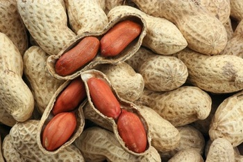 100% Organic High Quality Hot Sell peanuts in shell / without shell For Sale