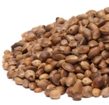 Bulk 99% Pure raw HEMP SEEDS for sale