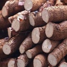 Top-quality Fresh Cassava in bulk with attractive meal