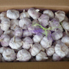 /product-detail/wholesale-pure-white-fresh-natural-garlic-50033652516.html
