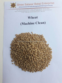 Enhanced Quality of Indian Wheat to Improve Body Metabolism