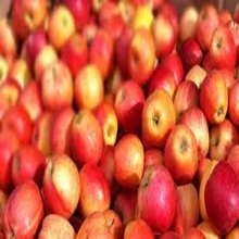 New fresh fruits red Fuji apples for sale