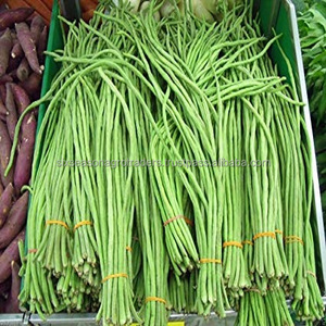 Wholesale Green bean fresh vegetable