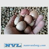 DRIED BETEL NUT with high quality