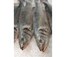 Best Quality Seafood Frozen Sardine Fish Whole Round Exporter