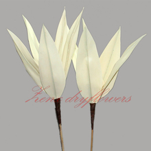 Al por mayor eco amigable Palma Arrow sticks para la <span class=keywords><strong>decoración</strong></span> casera flores secas
