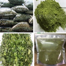 SPINACH LEAF/ PANDAN LEAF ( FRESH/FROZEN/DRIED/POWDER) FOR EXPORT