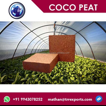 coir blocks for agricultural growing media coco substrate