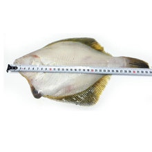 Good Price Frozen Fish Yellow Fin Sole Fillet