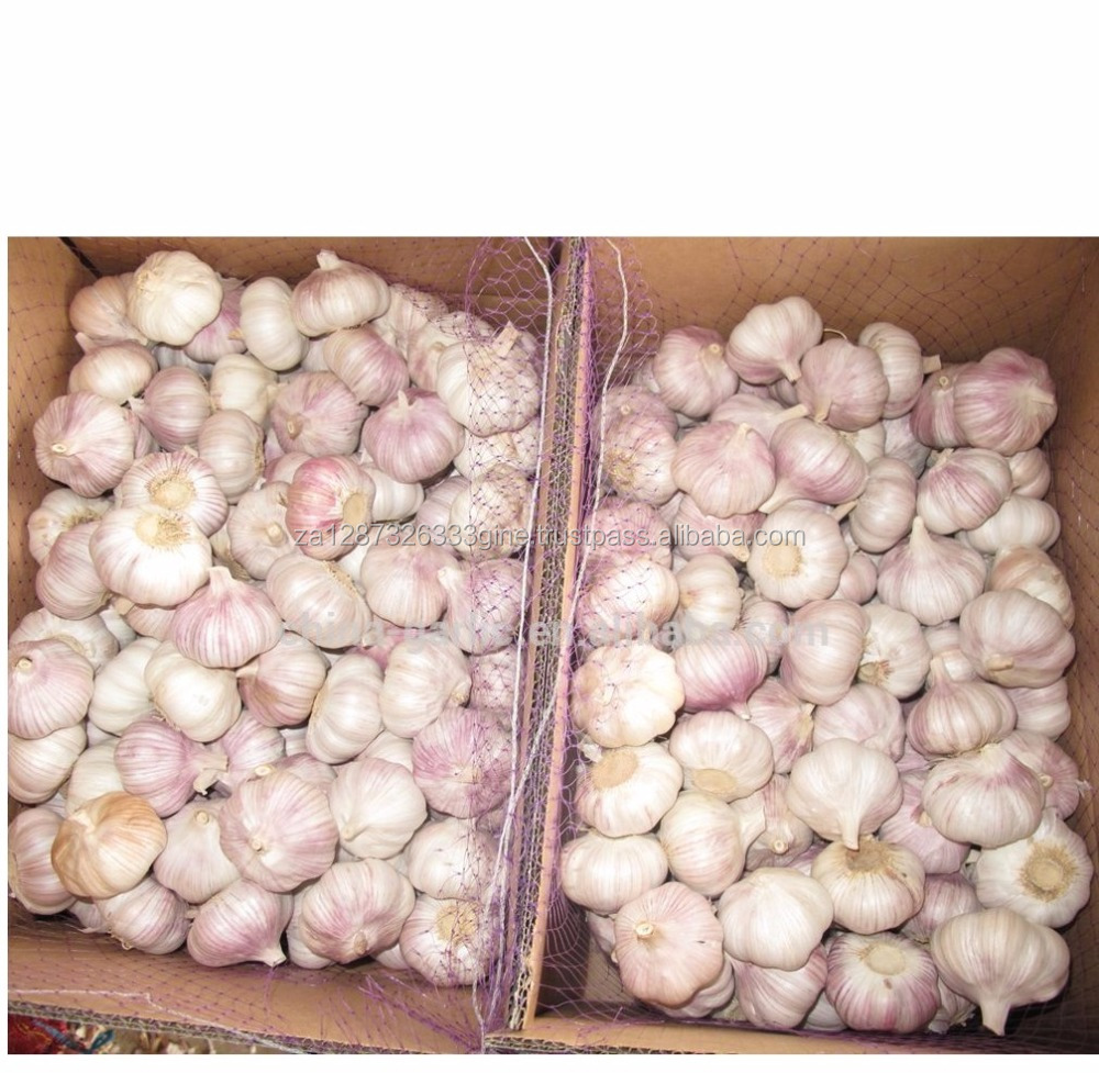 New Crop 2017 fresh natural garlic with high quality top suppliers