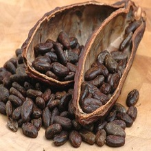 Best Cacao Beans +Dried Criollo Cocoa Beans +Dried Fermented Cacao +Dried Raw Cocoa Beans