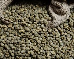 Green Robusta Coffee Bean